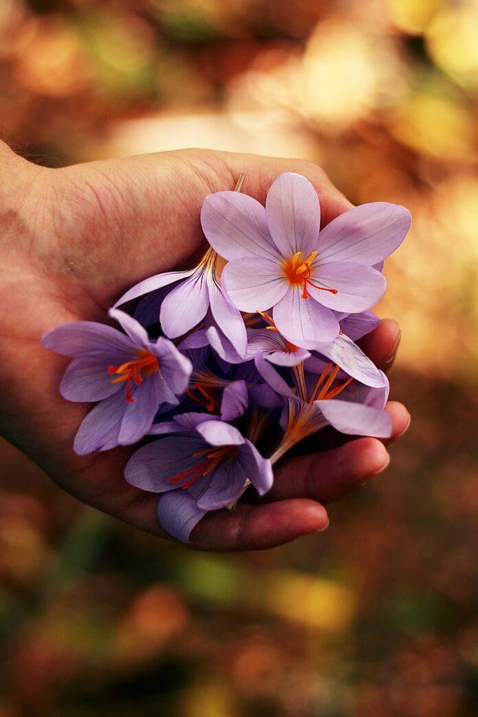 bedemand blomster